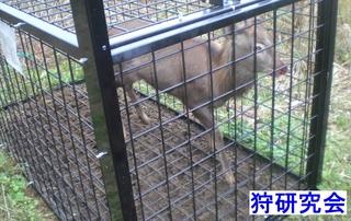 20151117 deer_mini.JPG
